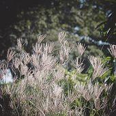 Flowers On Morning Sunlight Background, Morning, Spring, Background, Sunlight poster