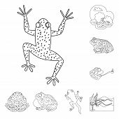 Isolated Object Of Amphibian And Animal Logo. Collection Of Amphibian And Nature Stock Vector Illust poster