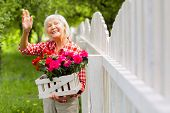 Beaming Elderly Lady Waving To Her Neighbor Standing Near Fence poster