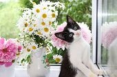 A Little Curious Kitten On A Sunny Window. A Kitten On The Background Of Peonies And Daisies In The  poster