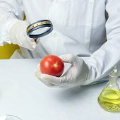 Gmo Genetically Modified Food In Lab Concept. Lab Assistant Food Safety Laboratory Procedure, Analys poster
