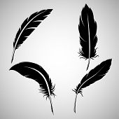 Black Feathers, On White Background. Feathers On A White Background, Black Feathers poster