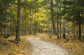 Winding Forest Trail At Potawatomi State Park