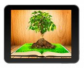 Tree on  open book with grass on wooden planks in black tablet like Ipade . Concept of growth of kno
