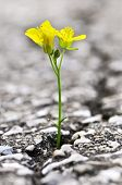 Flower Growing From Crack In Asphalt