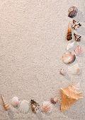 Frame Of Sea Shells On Sand