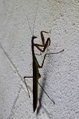 pic of cinder block  - A praying mantis stands on a white cinder block wall - JPG