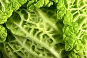 Fresh Raw Cabbage
