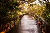 Wooden Boardwalk After The Rain