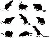 stock photo of rats  - Vector illustration of silhouettes of domestic rats - JPG