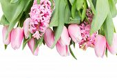 pink tulips and hyacinth flowers on white