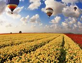 Boundless fields with blossoming pink, red and yellow buttercups. Over fields the huge multi-color b