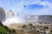 Waterfalls and birds in Brazil. Black Andean condors fly over the foamy waterfalls of Iguazu. The picture was taken Fisheye lens