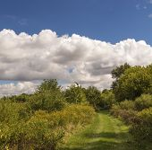 stock photo of goldenrod  - Beautiful fall day with blooming Goldenrod and a beautiful blue sky with cumulus clouds - JPG