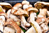 image of porcini  - Closeup bunch of Porcini mushrooms at the market in Italy