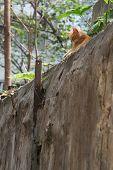 A Cat Ersting In Backyard