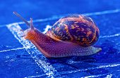 stock photo of olympiade  - snail crosses the finish line as winner - JPG
