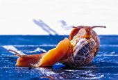 Battle Between Snail To Cross The Finish Line