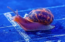 stock photo of olympiade  - snail crosses the finish line as winner - JPG