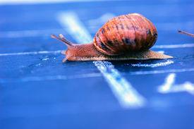 pic of olympiade  - snail crosses the finish line as winner - JPG