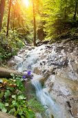 Fast river in a forest in Slovak Paradise, Slovakia