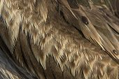 Feathers of bird close up background photo