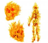 human skeleton ans skulls in flame on isolated on white background