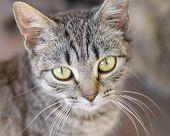 Little Gray Kitten Or Cat
