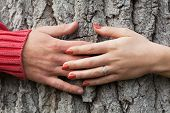 Hands Around The Tree