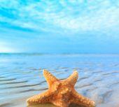 Sea Landscape Shell