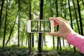 phone in hand on the forest backgrounds