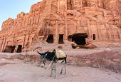 Donkey In Front Of Ancient Buildings In Petra