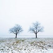 Two trees on snow covered field