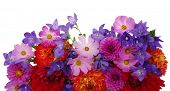 Background of beautiful flowers on white