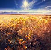 image of prairie  - Prairie  landscapes - JPG