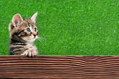 Cute little kitten with wooden plank on green background