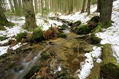 mountain brook in forest at winter time