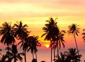 Palm Paradise Fiery Backdrop