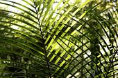 Closeup of green leaves in jungle