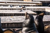 Sea lions on the floating platform