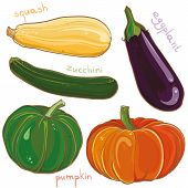 Vector Set With Illustration Of Eggplant, Pumpkin, Squash And Zucchini
