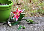 Run away plant