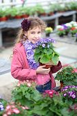 Girl in a pink jacket holding flower pot with cineraria in the greenhouse