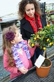 Little girl with mother standing next to small tree citrus cumquat in the greenhouse