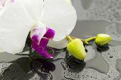 Wet Orchid