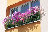 Flowers At Window