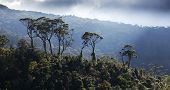 foto of darjeeling  - green tea plantation landscape - JPG