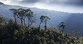 stock photo of darjeeling  - green tea plantation landscape - JPG