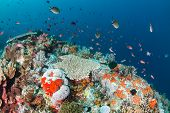 Tropical fish on a healthy reef