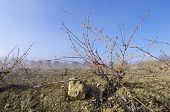View of a winter vineyard, Zaragoza province, Aragon, Spain
